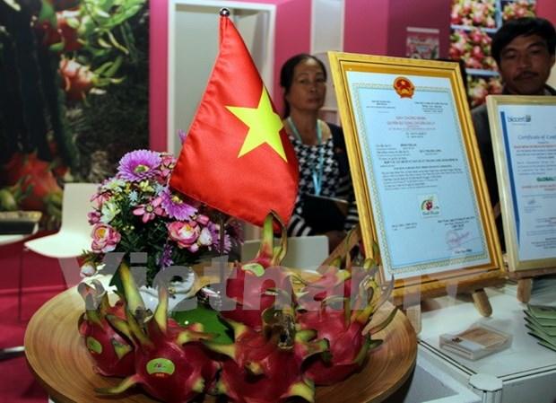 Pitahaya vietnamita presente en el Feria internacional de Berlin hinh anh 1