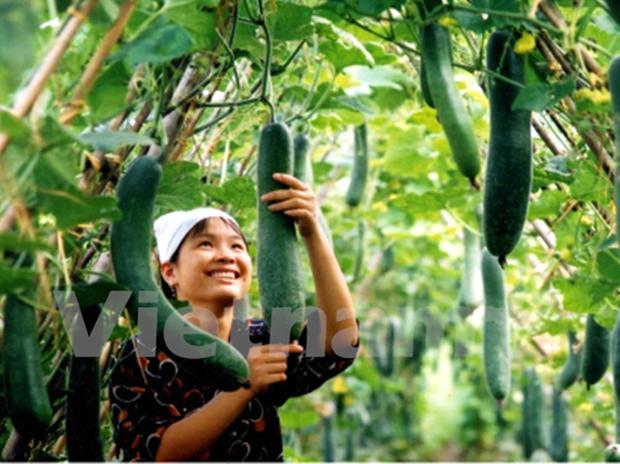 Exportaciones hortofruticolas vietnamitas siguen con bueno rumbo hinh anh 1