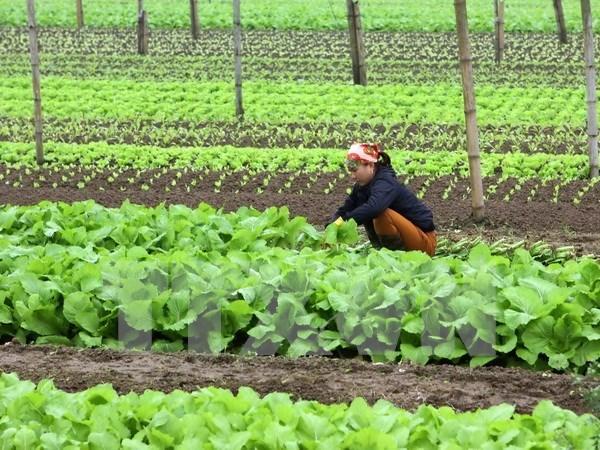Paises Bajos estudia desarrollo de centro de semillero en provincia vietnamita hinh anh 1