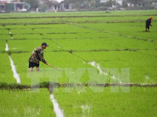 Provincia vietnamita fomenta apoyo a agricultores ante cambio climatico hinh anh 1