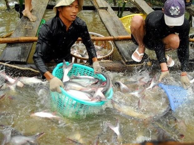 Cria de peces Tra de Vietnam responde a criterios internacionales, afirma GAA hinh anh 1