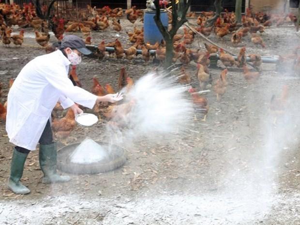 Vietnam intensifica medidas preventivas contra gripe aviar hinh anh 1
