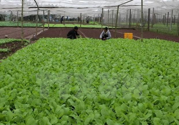 Ofrece Sudcorea asistencia al desarrollo agricola organico en provincia vietnamita hinh anh 1