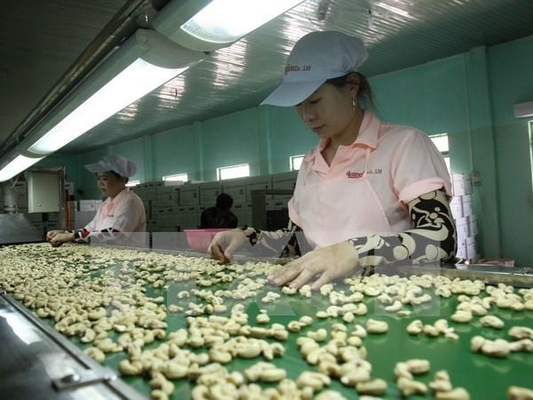 Vietnam preve ingreso multimillonario de exportaciones de anacardo hinh anh 1
