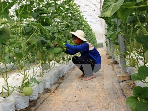 Construiran en provincia sudvietnamita fabrica de procesamiento de frutas hinh anh 1