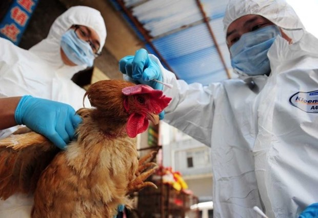 Vietnam implementa medidas preventivas contra gripe aviar A/H7N9 hinh anh 1