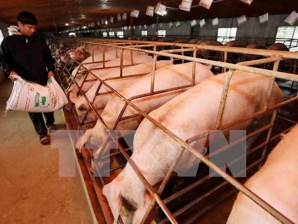 Vietnam y Canada intensifican cooperacion en agricultura hinh anh 1
