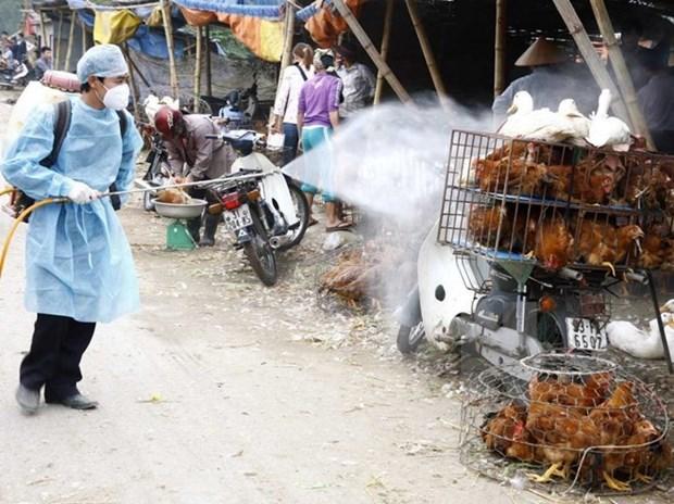 Vietnam acelera medidas preventivas contra gripe aviar H7N9 hinh anh 1
