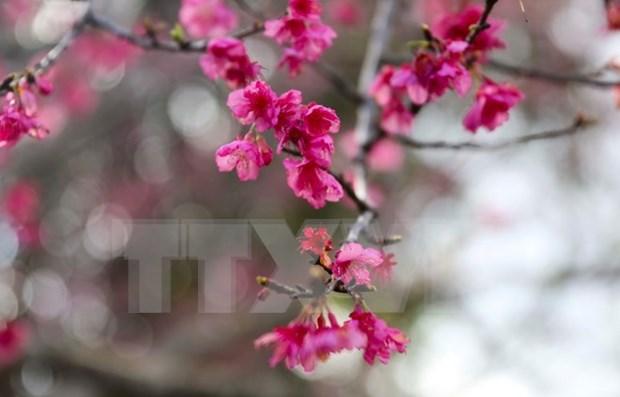 Efectuaran diversas actividades de intercambio cultural Vietnam-Japon hinh anh 1