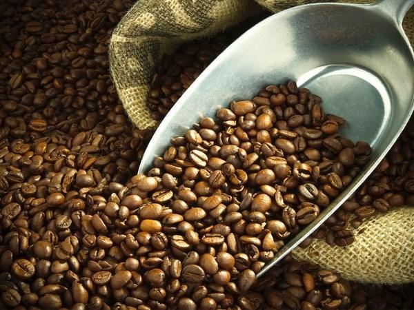 En alza exportaciones de cafe de Vietnam hinh anh 1
