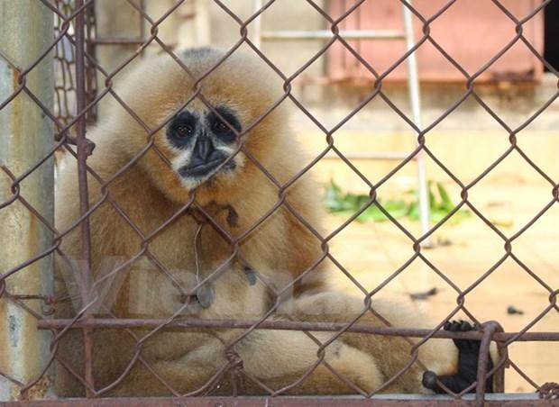 Estimulan participacion juvenil en proteccion de animales silvestres en Vietnam hinh anh 1