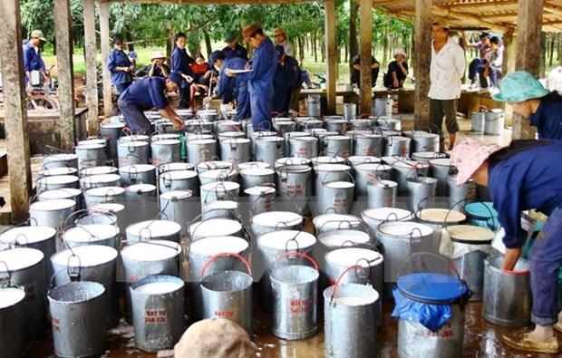 Vietnam ingresa 392 millones de dolares por exportaciones de caucho hinh anh 1