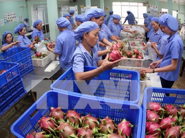 Exportaciones de vegetales y frutas de Vietnam preven alcanzar valor multimillonario hinh anh 1