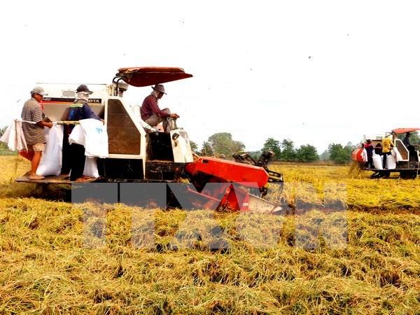 Agricultura, sector mas atractivo para inversores en Altiplanicie Occidental hinh anh 1
