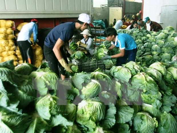Vietnam aspira a tres mil millones de dolares por exportaciones de vegetales y frutas hinh anh 1