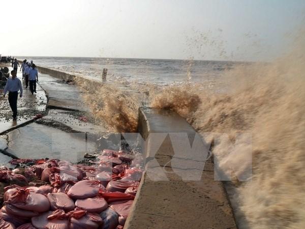 Provincia vietnamita despliega medidas contra erosion del litoral hinh anh 1