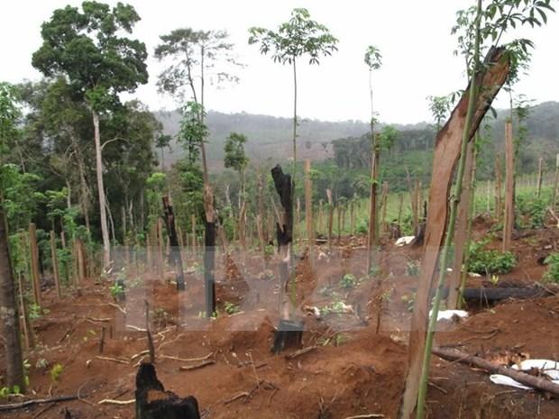 Vietnam estudia medidas de proteccion del medio ambiente hinh anh 1