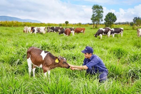 Vietnam y Australia fortalecen cooperacion en ganaderia hinh anh 1