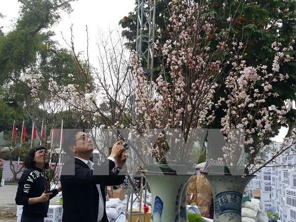Amor a flores, hilo que enlaza a pueblos de Vietnam y Japon hinh anh 1