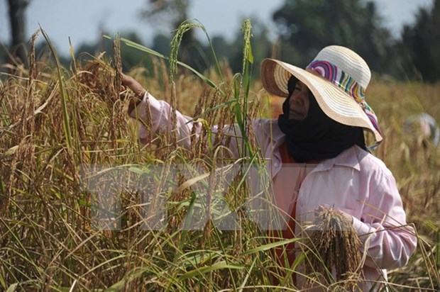 Vietnam atrae inversion japonesa en agricultura hinh anh 1