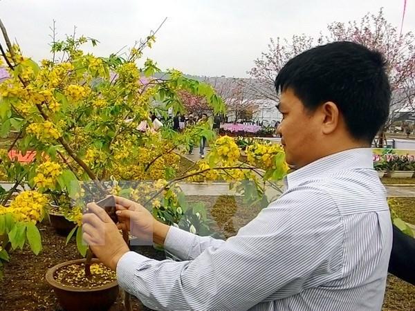 Celebran festival de Flores de Cerezo en localidad norvietnamita hinh anh 1