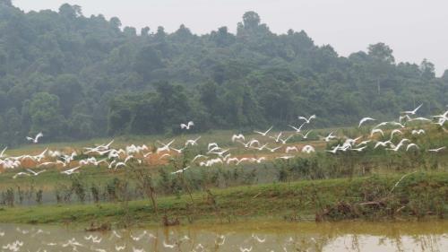 Thanh Hoa refuerza proteccion de poblacion de aves en parque de Ben En hinh anh 1