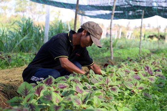 Japon apoya desarrollo de agricultura limpia en Ciudad Ho Chi Minh hinh anh 1