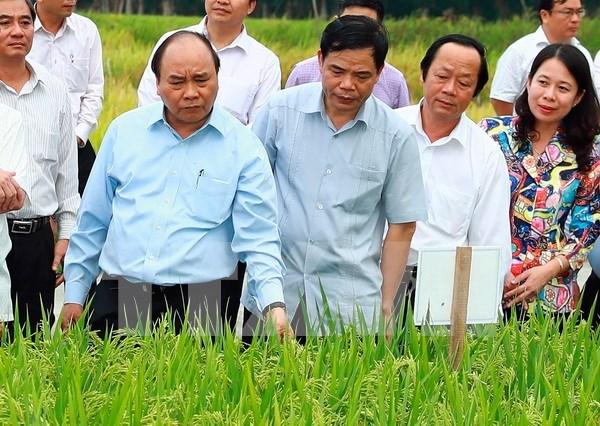 Abogan por establecer zona agricola de alta tecnologia en provincia survietnamita hinh anh 1