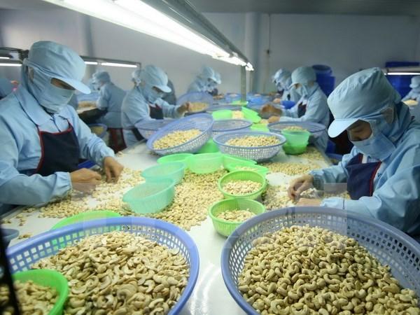 Vietnam registra baja en exportacion de anacardos hinh anh 1