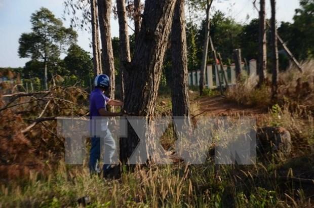 Vietnam aplica sistema de gestion de recursos forestales mediante tablets hinh anh 1