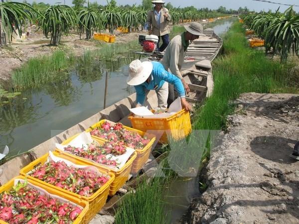 Exigen levantar la suspension india de compra de productos vietnamitas hinh anh 1