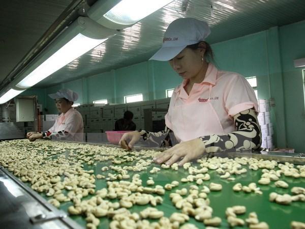 Industria vietnamita del anacardo enfrenta desafios hinh anh 1
