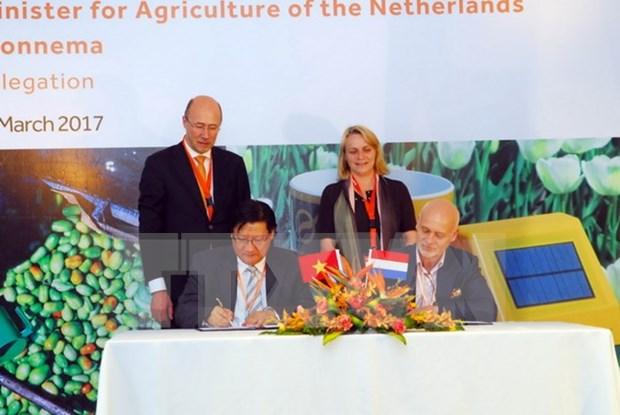 Paises Bajos comparte experiencias sobre agricultura sustentable en Vietnam hinh anh 1