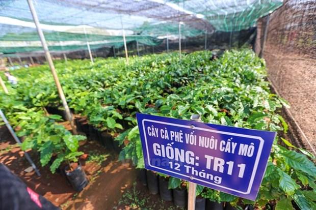 Ciudad Ho Chi Minh y Paises Bajos impulsan cooperacion en agricultura y tecnologia hinh anh 1