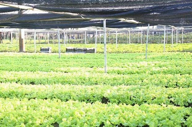 Vietnam y Paises Bajos robustecen cooperacion en agricultura hinh anh 1