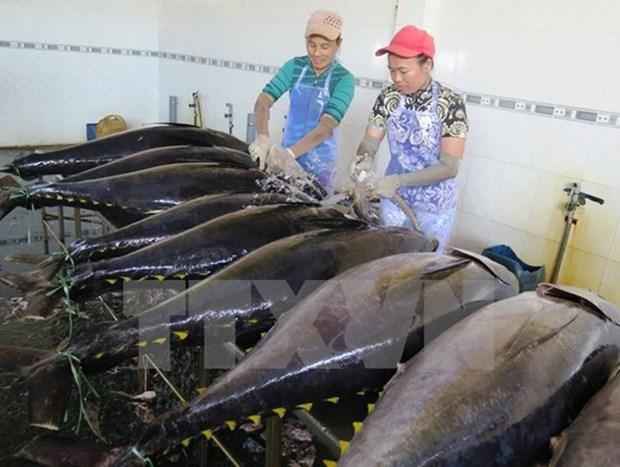Provincia vietnamita impulsa desarrollo sostenible del sector acuatico hinh anh 1