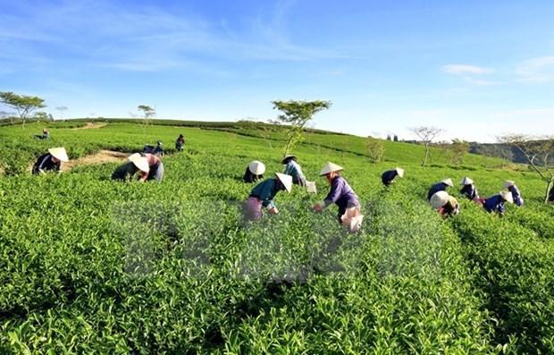 Vietnam impulsa el desarrollo de agricultura organica hinh anh 1