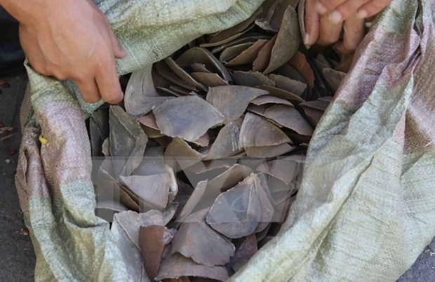 Decomisan lotes con escamas de pangolin en aeropuerto vietnamita hinh anh 1