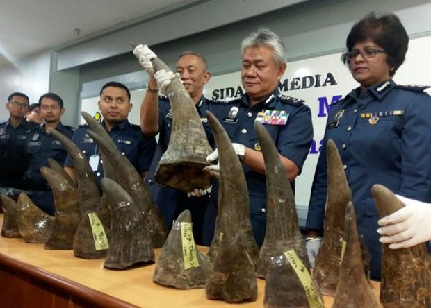 Malasia decomisa gran cantidad de cuernos de rinoceronte en aeropuerto hinh anh 1
