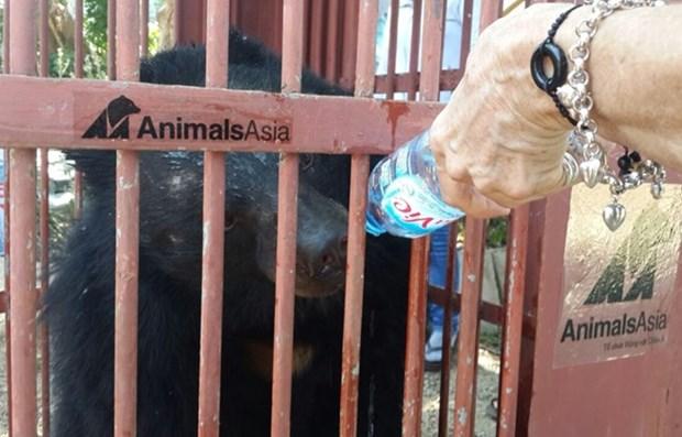 Rescatan a dos osos tibetanos en provincia altiplanica de Vietnam hinh anh 1