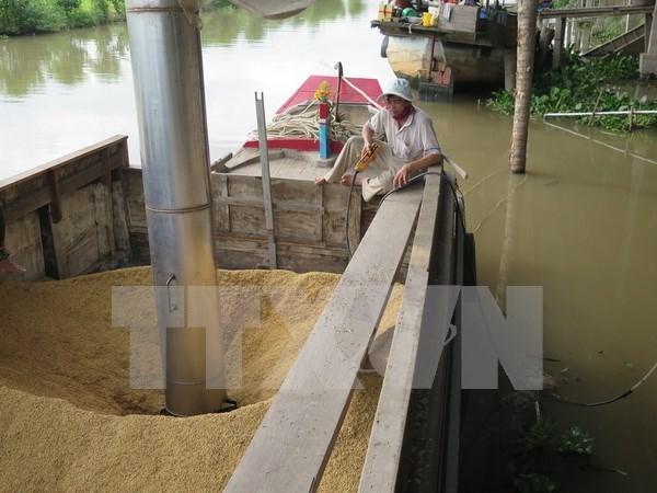 Prohibicion de Filipinas causa inquietudes entre exportadores vietnamitas de arroz hinh anh 1