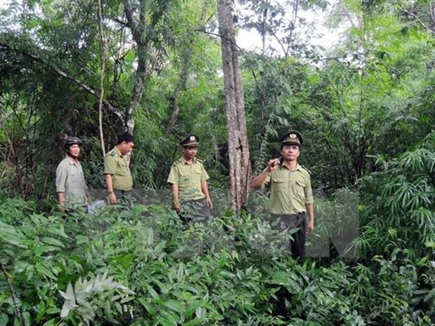 Vietnam implementa programa de reduccion de degradacion forestal hinh anh 1