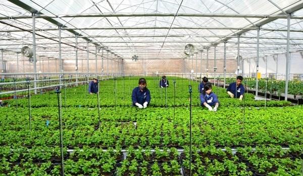 Ciudad centrovietnamita creara siete zonas agricolas de alta tecnologia hinh anh 1