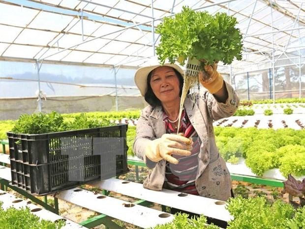 Inauguran primera feria de productos agricolas de cooperativas hinh anh 1