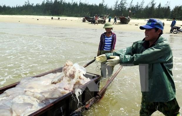 Thua Thien- Hue avanza en resarcimiento a afectados por incidente ambiental hinh anh 1