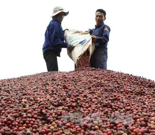Empresa taiwanesa impulsa promocion de productos cafeteros en Vietnam hinh anh 1