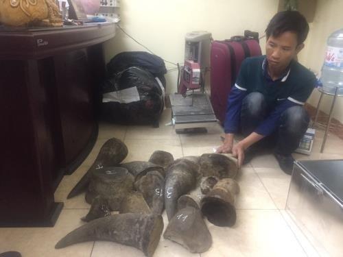 Arrestan en Vietnam a mayores traficantes de animales silvestres hinh anh 1