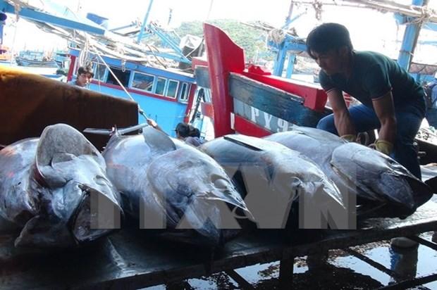 Vietnam y China impulsan desarrollo sostenible de pesca en golfo de Tonkin hinh anh 1