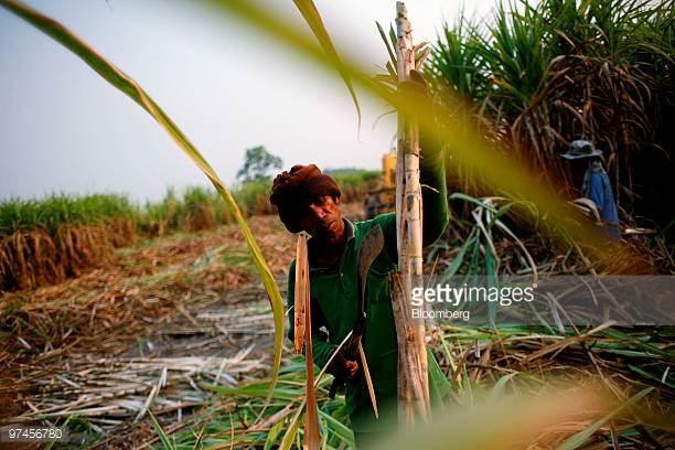 Tailandia incrementa produccion de azucar en cosecha 2016-2017 hinh anh 1