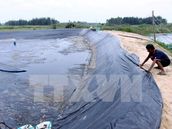 Vietnam planea elevar superficie de arenal destinado a cria de camarones hinh anh 1